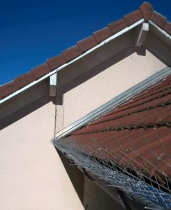 dépigeonnisation toit