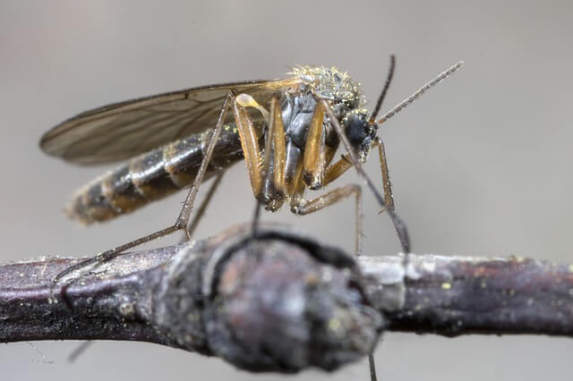 image moustique désinsectisation