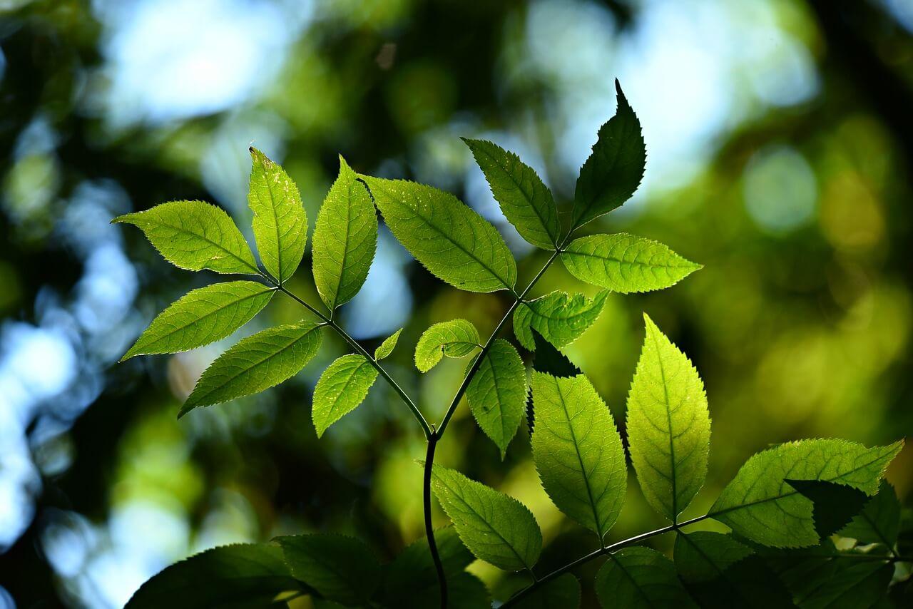 feuilles nature image